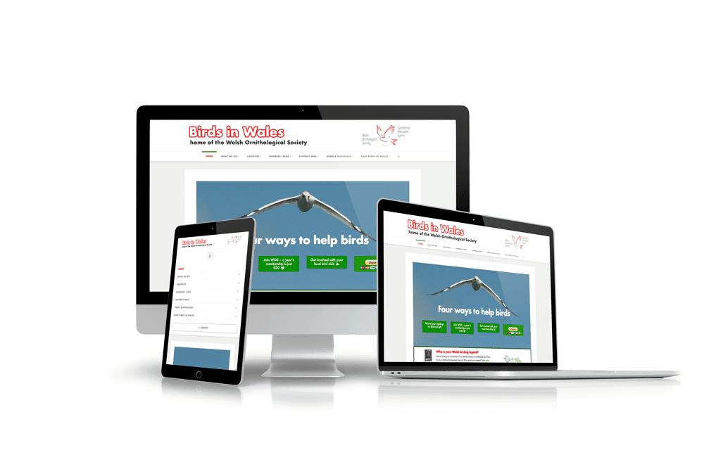 Birds In Wales Website Design Example